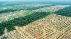 Odlesněná plocha společností United Cacao.