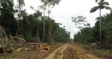 Amazonie: Skrví přijde rozvoj