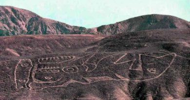 Nazca překvapila svět obří kosatkou